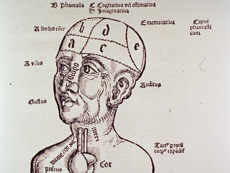 Human-Head-and-Shoulders,-with-Brain-Partitioned-and-Labeled