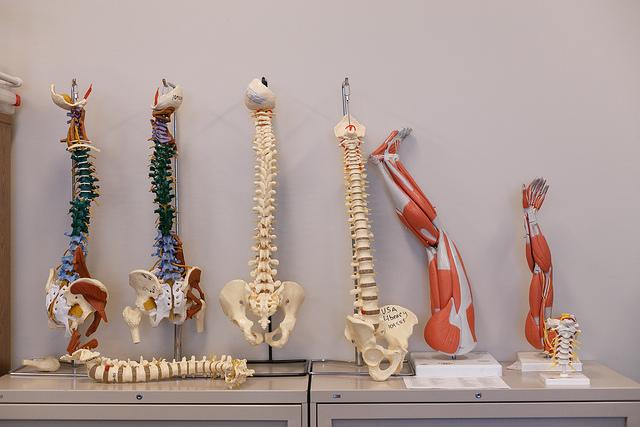 Spine models in San Marcos