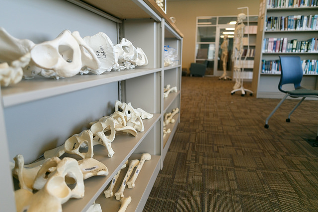Bone shelves in Austin