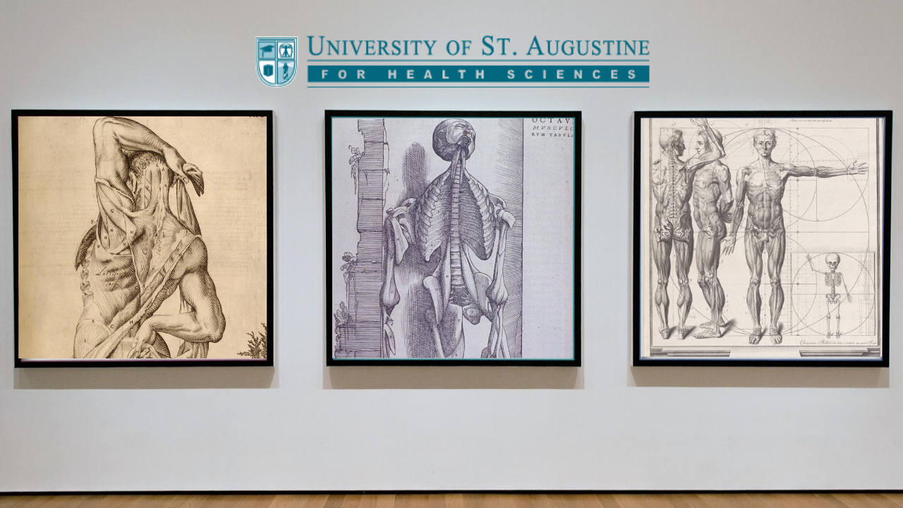 Exhibit of historical anatomical illustrations