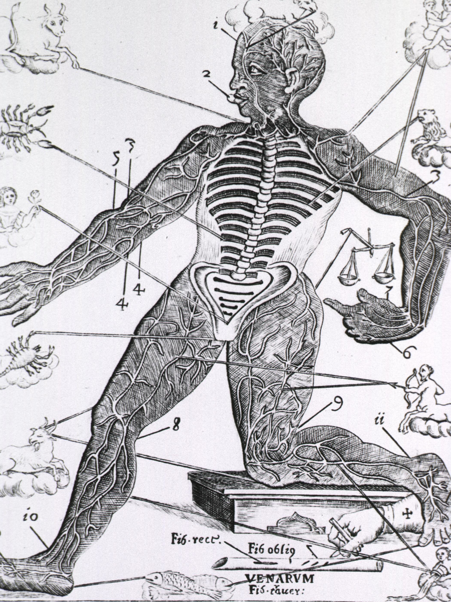 Zodiac-or-Vein-Man