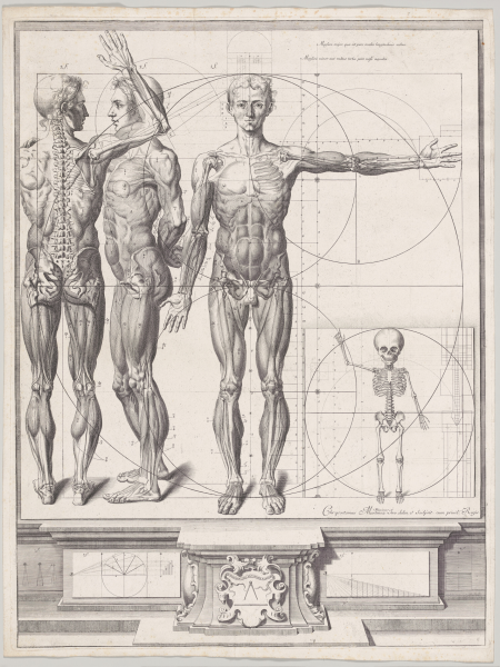 Unpublished-Plate-for-the-'Atlas-Anatomico'
